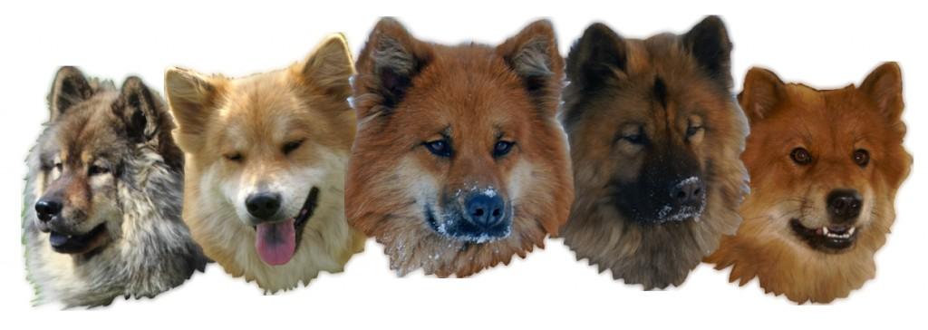 Hundebanner